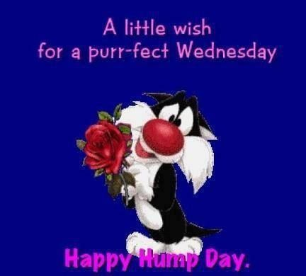 Happy Hump Day Quotes New Best Work Quotes Happy Hump Day Quotes Quote Looney Toons Days Of
